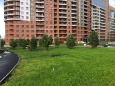 Ближе к реке высажены более 20 сибирских сосен